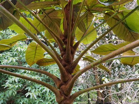 Alternative Eden Exotic Garden