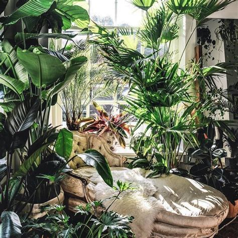 astonishing indoor garden ideas  pictures yhmag