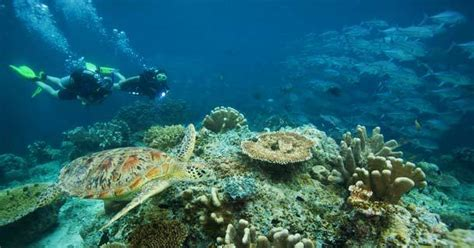 Dive In Lombok by Diving Lombok Two Fish Divers