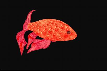 Fish Animation Goldfish Animated Scales Giphy Gifs