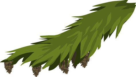 vector graphic branch evergreen fir spruce  image  pixabay