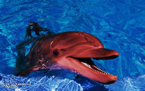 wood mirrors dolphin
