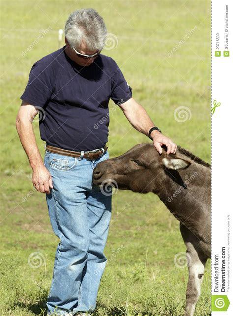 Man And Miniature Donkey Stock Image Image Of Donkey