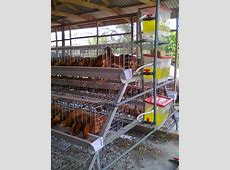 Best Commercial Poultry House Design With Broiler Poultry