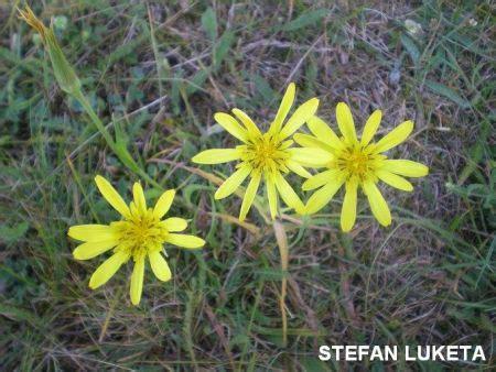 Klasifikacija biljaka — Bionet Škola