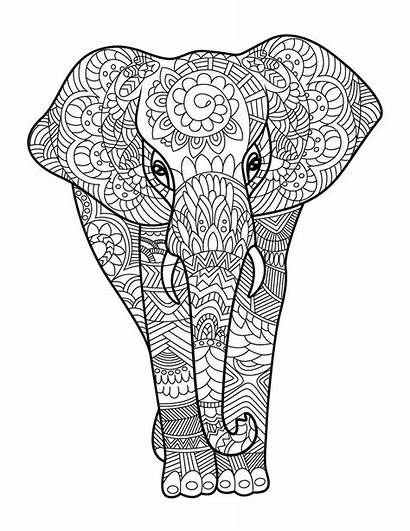Animals Coloring Adult Books Amazing Adults Pages