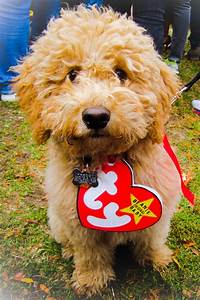 48 costumes ideas for pet costumes