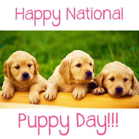 Image result for national puppy day images