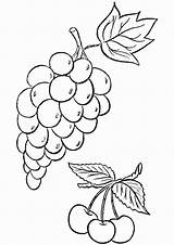 Coloring Grape Grapes Printable Cherries Worksheets Parentune Weintrauben Fruits Ausmalbilder Preschoolers sketch template