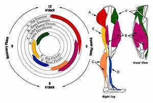 Debunking Myths About Pedaling Efficiency