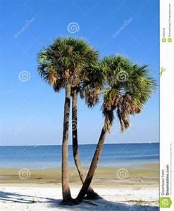 Palmen Für Draußen : palmen auf florida strand stockbild bild von drau en ~ Michelbontemps.com Haus und Dekorationen