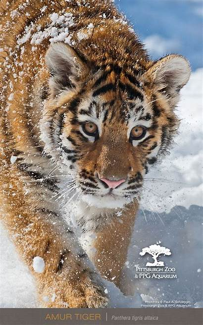 Wallpapers Phone Mobile 720p Screen Animals 1080p