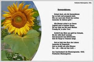 sonnenblume poetischer blumengarten 1843 171 gedichte