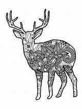 Coloring Deer Zentangle Adults Adult Mycoloring Printable sketch template