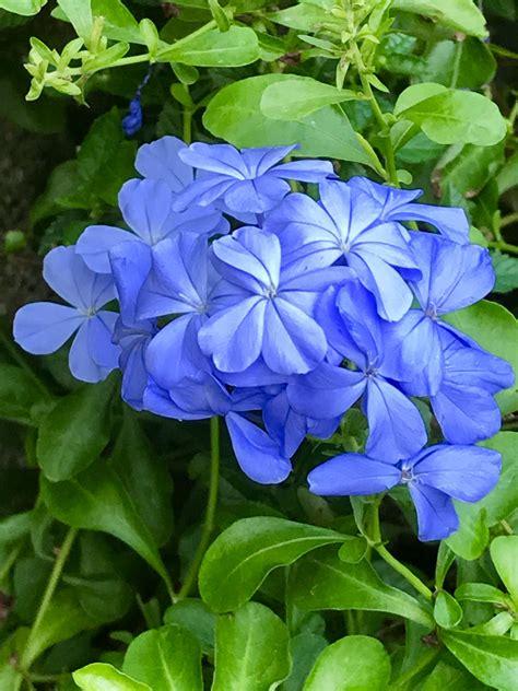พยับหมอก   ดอกไม้สวย, ดอกไม้, สวนดอกไม้