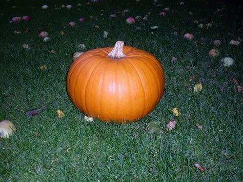 halloween kuerbis bilder blog
