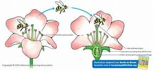 Pollination Methods  U2013 Athena U0026 39 S Home