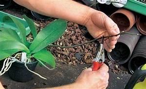 Orchideen Umtopfen Wurzeln Schneiden : expertentipps orchideen pflegen mein sch ner garten ~ A.2002-acura-tl-radio.info Haus und Dekorationen