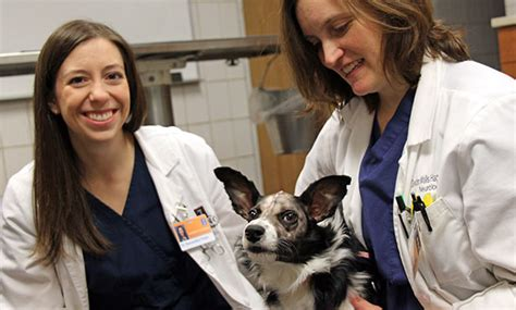 epilepsy manageable dogs veterinary medicine illinois
