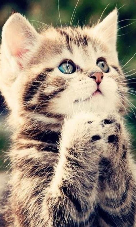 Free Cute Kittens Images Hd Wallpaper Apk Download For