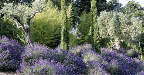 Garten Norden Pflanzen by Mediterrane Pflanzen Perfekt Imitiert Mein Sch 246 Ner Garten