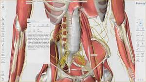 3d Organon Anatomy For Desktop  V3 0