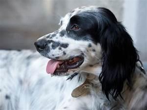 dogs laboratories