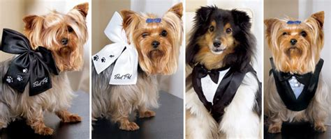 Wedding Accessories For Dogs : Incorporate Your Pet In Your Wedding Day