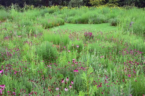 meadow gardens ask the expert how to plant a meadow garden with james hitchmough gardenista