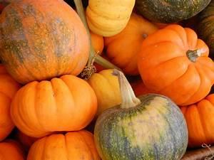 nine, fabulous, ways, to, get, creative, with, pumpkin