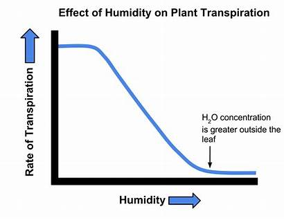 Transpiration Humidity Graph Effect Svg Plant Growth