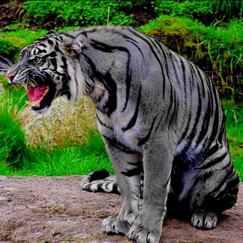 Rare Tiger Animals Beautiful