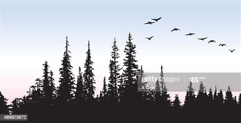 canadian geese glying   trees vector art getty