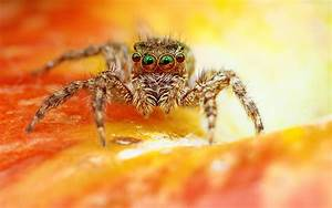 Scary Spider Wallpapers