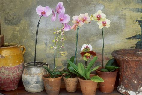 how do i care for an orchid after it blooms how to care for your orchids