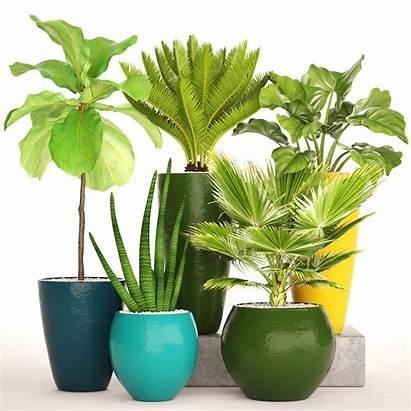 Tropical Plants Plant 3dexport Pot Models Cgtrader