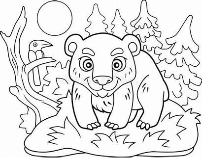 Funny Bear Coloring Colorir Illustrazione Orso Colorare