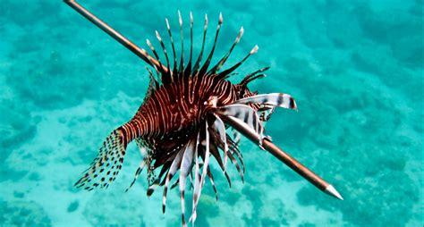 chefs   world   add invasive fish species