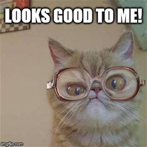 Glasses Meme - image tagged in funny cats made w imgflip meme maker