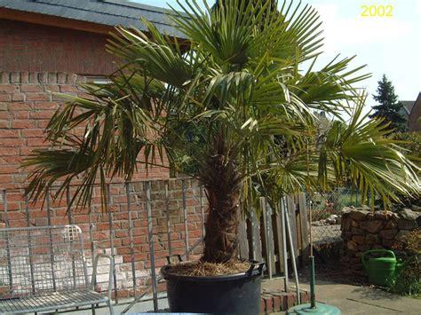 garten  exoten und palmen claus willich