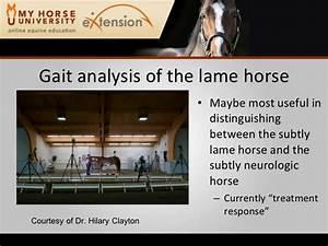 Lameness in the Performance Horse (Rashmir)