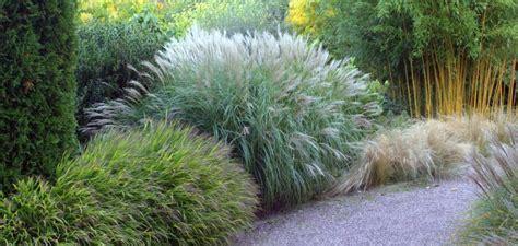 Gräser Im Garten Winterfest Machen by Gartengestaltung Mit Bambusrohren Natacharoussel
