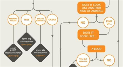 Flowchart: How To Name Animals In German DesignTAXI com