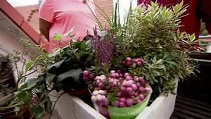 Winterharte Pflanzen Für Balkonkästen : winterharte balkonpflanzen bl tenmeer in herbst und winter ~ Orissabook.com Haus und Dekorationen