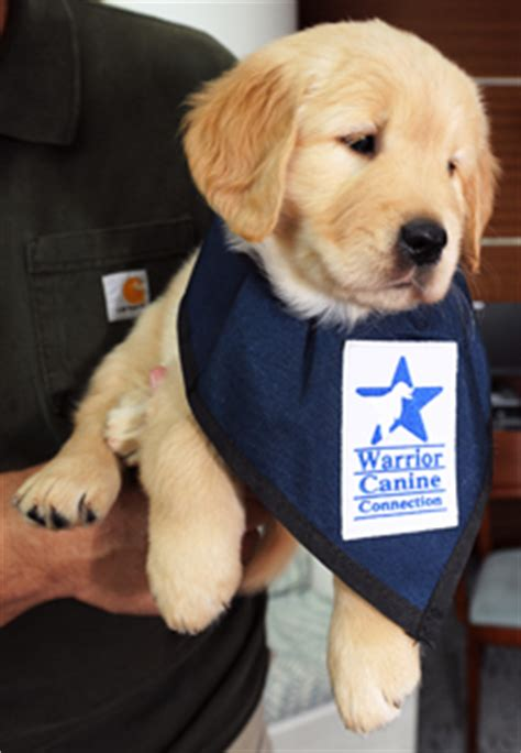 warrior canine connection  veterans service