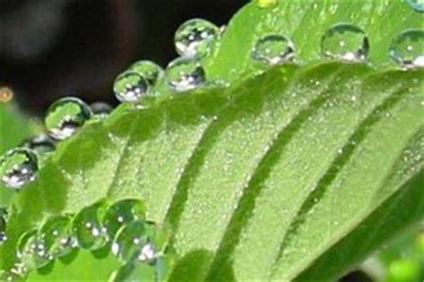evapotranspiration environmental monitor