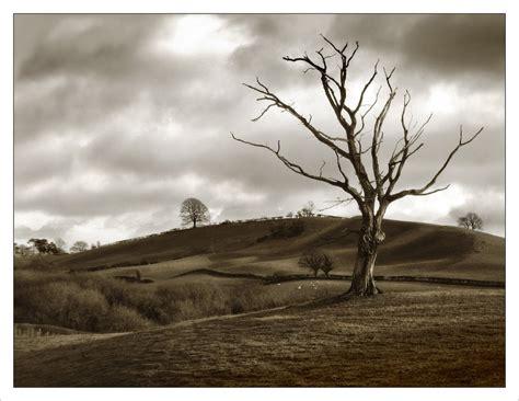 burton landscape panoramio photo of tim burton style dead tree in winter landscape
