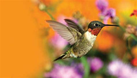 hummingbirds wild birds unlimited wild birds unlimited