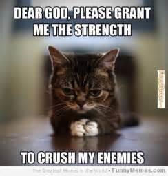 cat memes cat memes cat memes grant me the