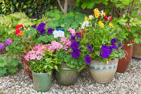 Secret Tips For Successful Container Gardening Acegardener